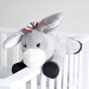 donkey klein